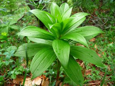 systématique des plantes